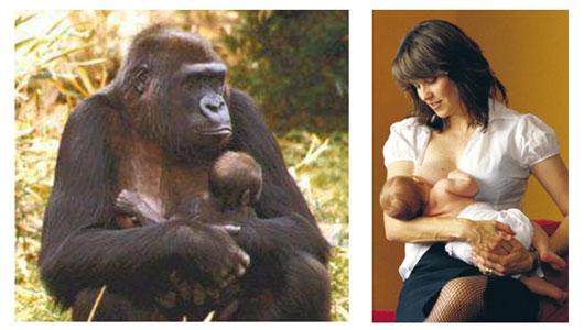 Žinduoliai: žmogbeždžionė gorila ir moteris